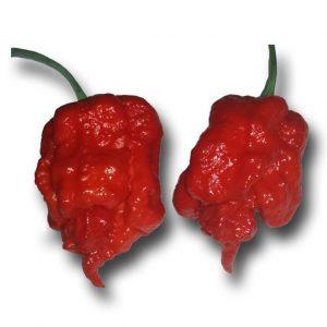 Carolina Reaper chili mag 10 szem/ csomag