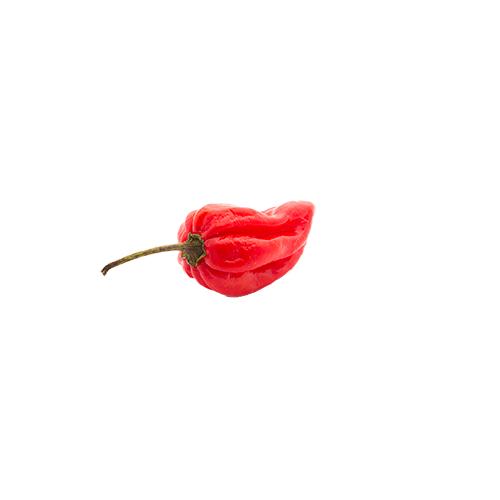 Habanero Red Chili paprika mag /10 szem